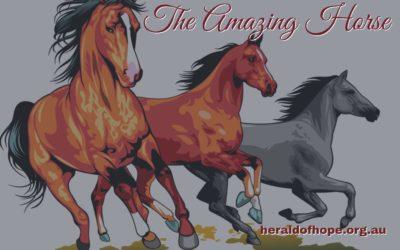 奇妙的马 Amazing Horse