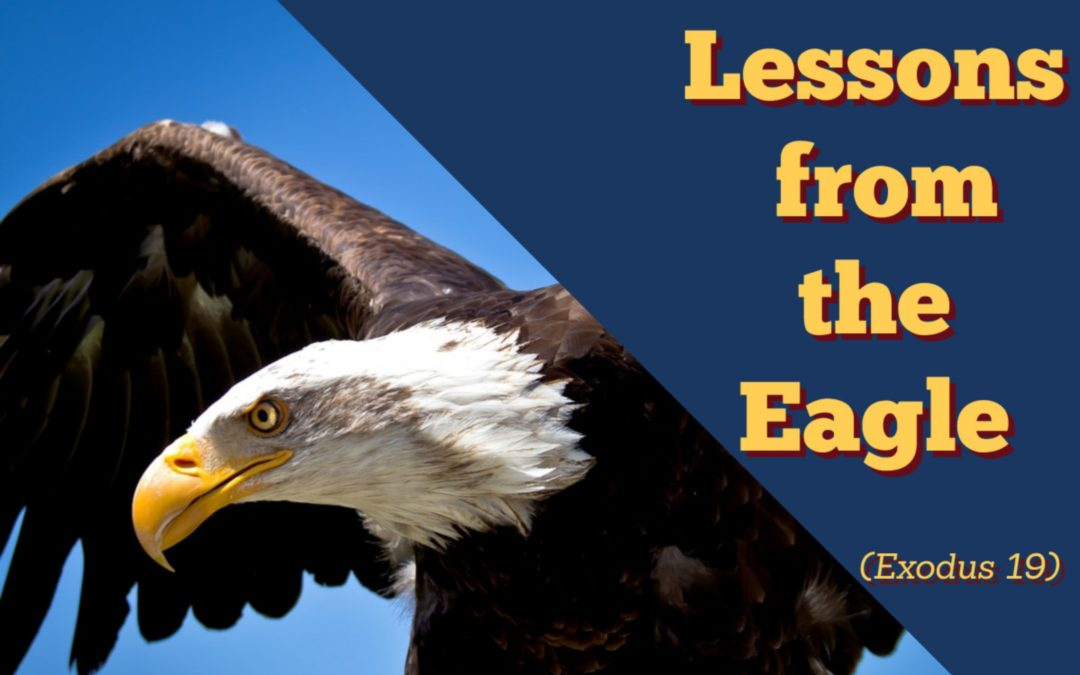 鹰课堂 Lessons from Eagles